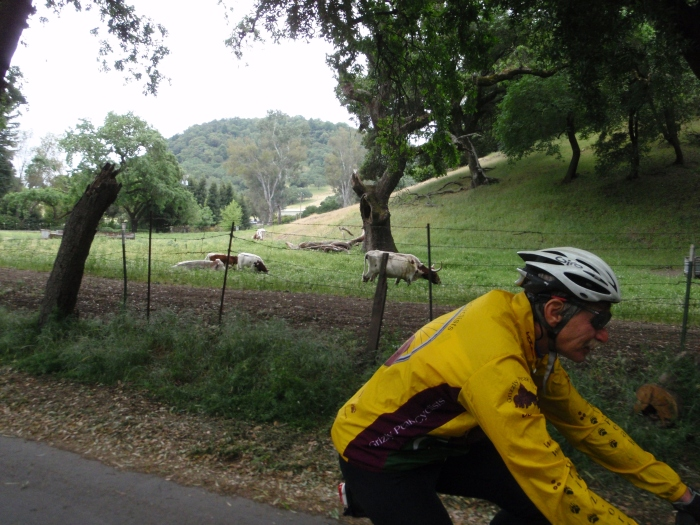 Michael and the Long Horns of Yountville