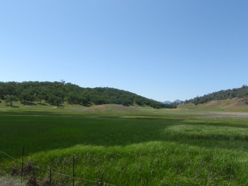 Lush fields near Pope Valley.  The valley was also full of wildflowers, which are not visible on this scale.